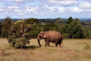 Mondulkiri - Elephant Valley Project - Cambodja