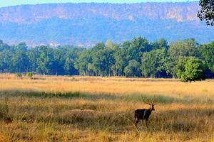 Nationaal Park - Hert - India - foto: flickr