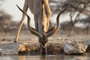 antilope - Etosha - Namibie - foto: Onguma Tented Camp