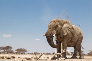 olifant - Etosha - Namibië - foto: Onguma Tented Camp