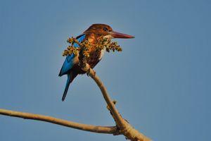Panna Nationaal Park - Vogel - India - foto: unsplash