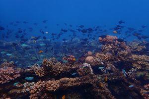 Pemuteran - Koraalrif - Tropische Vissen - Bali -Indonesie - foto: unsplash