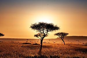 Savanne - landschap - Kenia