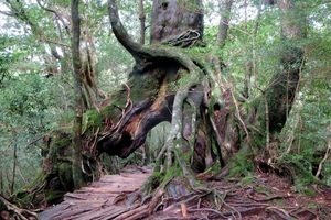 Shiratani Unsuikyo - Yakushima - Japan - foto: flickr