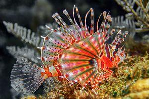 Sulawesi - Duiken - Tropische Vis - Indonesie - foto: unsplash