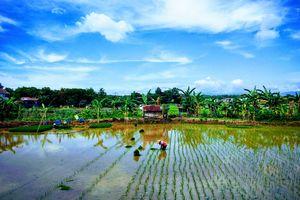 Sulawesi - Natuur - Rijstveld - Locals - Indonesie - foto: unsplash