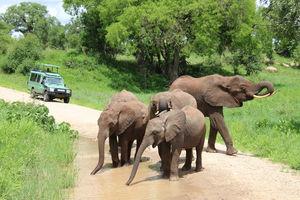 Tarangire - safari green season - Tanzania - foto: Martijn Visscher
