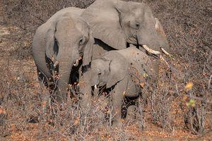 Tuli Game Reserve - olifanten - Botswana - foto: Tuli Safari Lodge