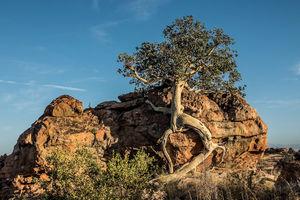 Tuli Game Reserve - scenery - Botswana - foto: Tuli Safari Lodge