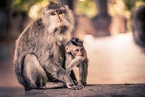 Ubud - Aapje - Bali - Indonesie - foto: pixabay