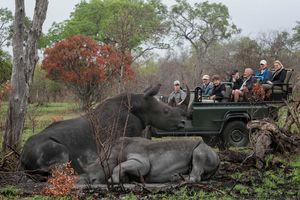 Umkumbe Safari Lodge Sabi Sands Zuid-Afrika - neushoorn