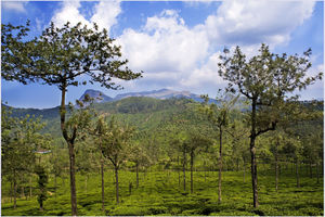 Valparai - Coimbatore - India - foto: flickr