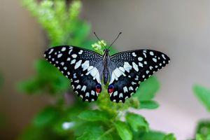 Vlinder - Mararikulam - India - foto: unsplash