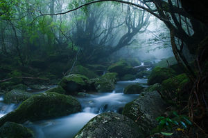 beekje - Yakushima - Japan - foto: flickr
