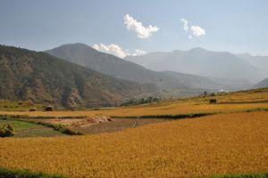 Rijstvelden Dochu la pas - Bhutan