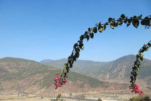 uitzicht met bloem Hotel Vara - Hotel Vara - Bhutan - foto: Mieke Arendsen