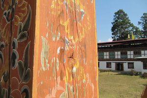 Houtschildering bij Chorten Nebu klooster, Punakha