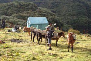 Paarden in Buthan - Druk Path - Bhutan