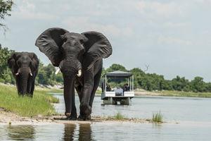 bootsafari -Chobe National Park - Botswana - foto: Muchenje Safari Lodge
