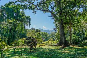 Botanische tuinen - Kandy - Sri Lanka - foto: flickr
