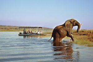 olifant met boot - Chobe National Park - Botswana