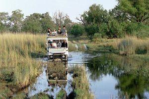 gamedrive moremi - kampeersafari - Botswana - Botswana