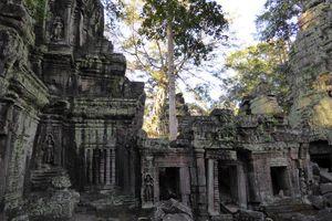 Ta Prohm Tempel - Cambodja