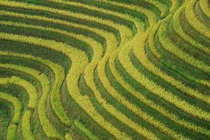 Detail rijstterras