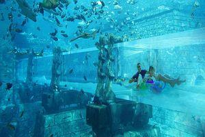 Aquaventure Dubai - Dubai
