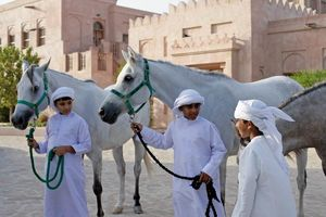 witte paarden in Abu Dhabi - Abu Dhabi - Dubai