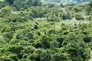 forest - Amber Mountain - Madagaskar - foto: Nature Lodge