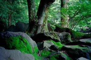 groene natuur - Kirishima - Japan - foto: flickr
