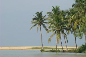 strand met palmen - Kumarakom - India