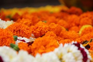kleurrijke bloemen bij Bodhgaya 2