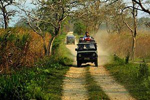 Jeeptocht in het Kaziranga National Park - Kaziranga NP - India
