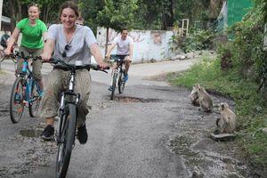 aapjes langs de weg tijdens fietstour in Rajasthan - Rajasthan - Udaipur - India