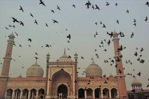 Jama Masjid moskee Delhi - Delhi - India