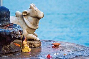 Rishikesh beeld koe - India