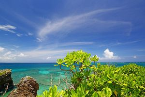 Planten op Okinawa