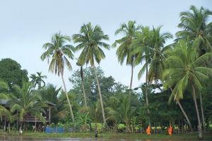 oever met monniken en palmbomen - Khong Island? - Laos