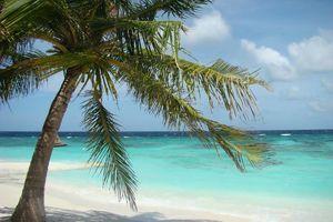 palmboom wit strand malediven - Malediven