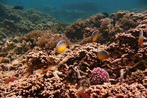 vissen en koraal op Mauritius - Mauritius