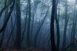 mist - Yakushima - Japan - foto: flickr