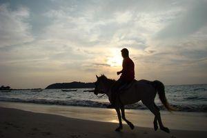 paard op strand - Ngapali - Myanmar
