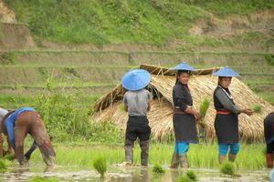 Pintauk - Kentung - Kengtung - Myanmar