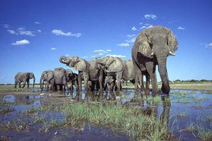 olifanten in water zon - Etosha National Park - Namibië