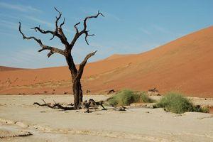 Deadvlei - Sossusvlei/Deadvlei - Namibië
