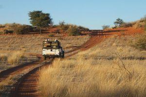 Safari Kalahari Desert - Kalahari Desert - Namibië