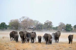 olifanten bij Nambwa Tented Lodge - Nambwa Tented Lodge - Namibië