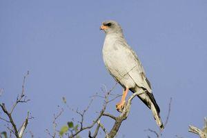 vogel Etosha